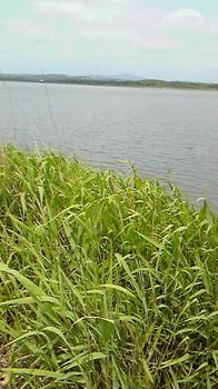 isikari river.jpg
